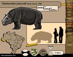 Neotoxodon pascuali