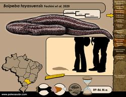 Boipeba tayasuensis
