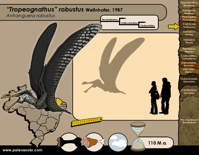 Tropeognathus robustus