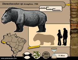 Stereotoxodon sp