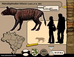 Nanolophodon tutuca