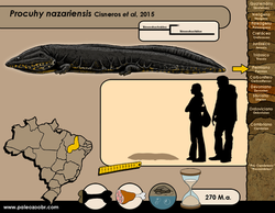 Procuhy nazariensis