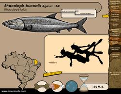 Rhacolepis buccalis