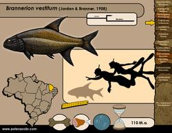 Brannerion vestitum