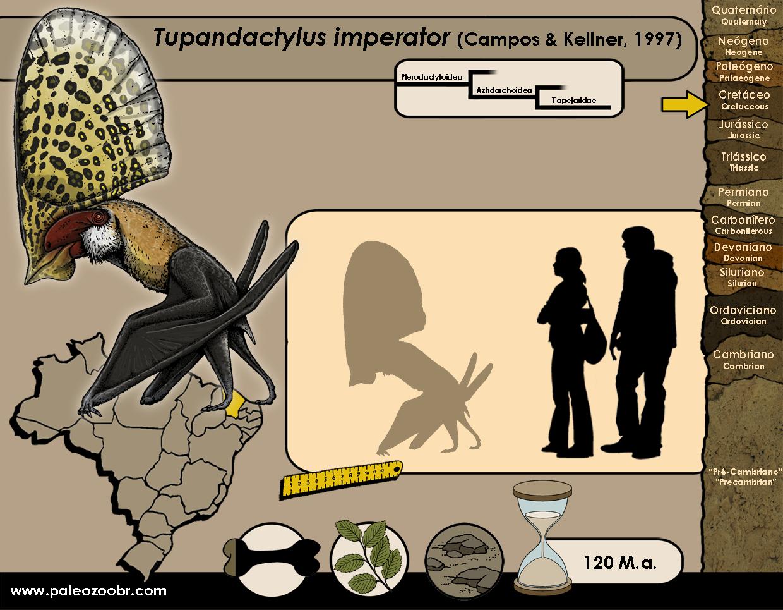 Tupandactylus imperator