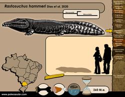 Rastosuchus hammeri
