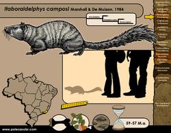 Itaboraidelphis camposi