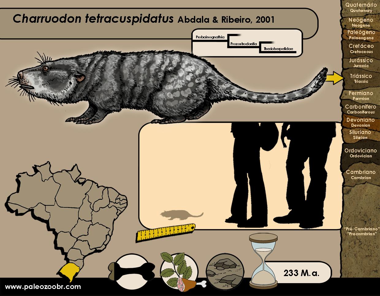 Charruodon tetracuspidatus