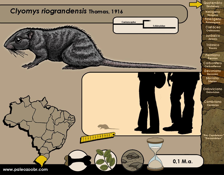 Clyomys riograndensis