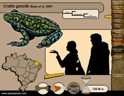 Cratia gracilis