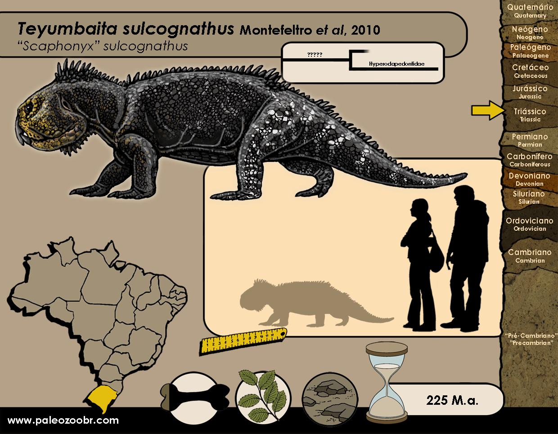 Teyumbaita sulcognathus