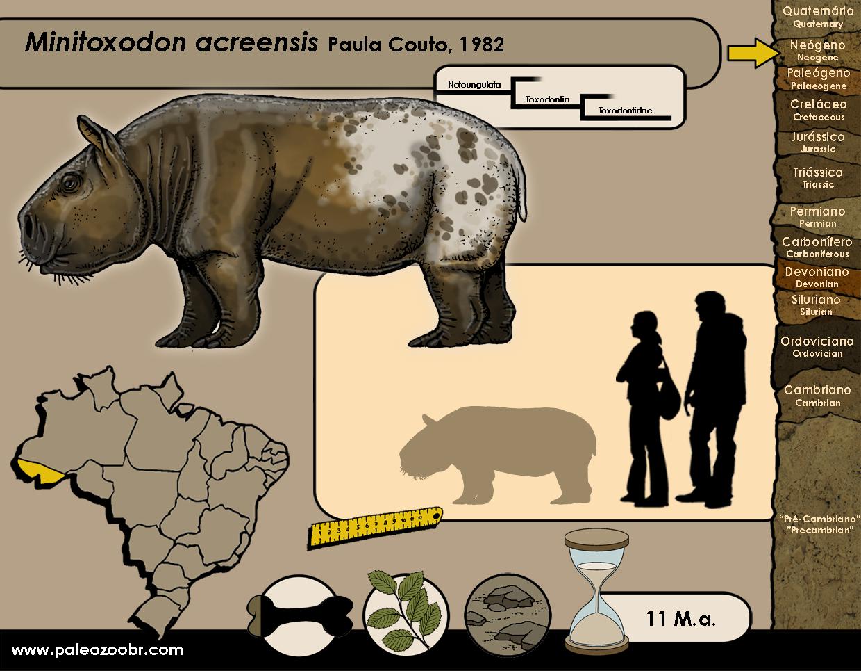 Minitoxodon acreensis