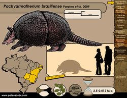 Pachyarmatherium brasiliense
