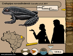 Cratopipa novaolindensis