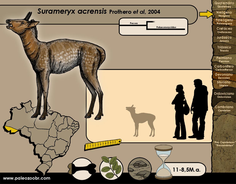 Surameryx acrensis