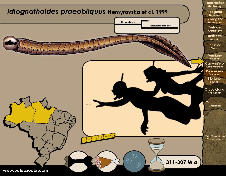 Idiognathoides praeobliquus