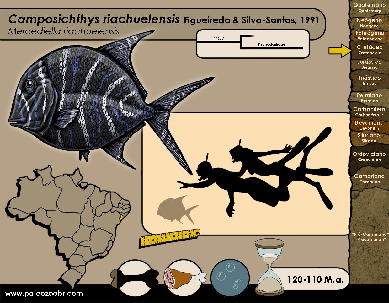 Camposichthys riachuelensis