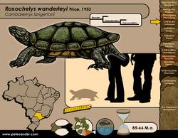 Roxochelys wanderleyi