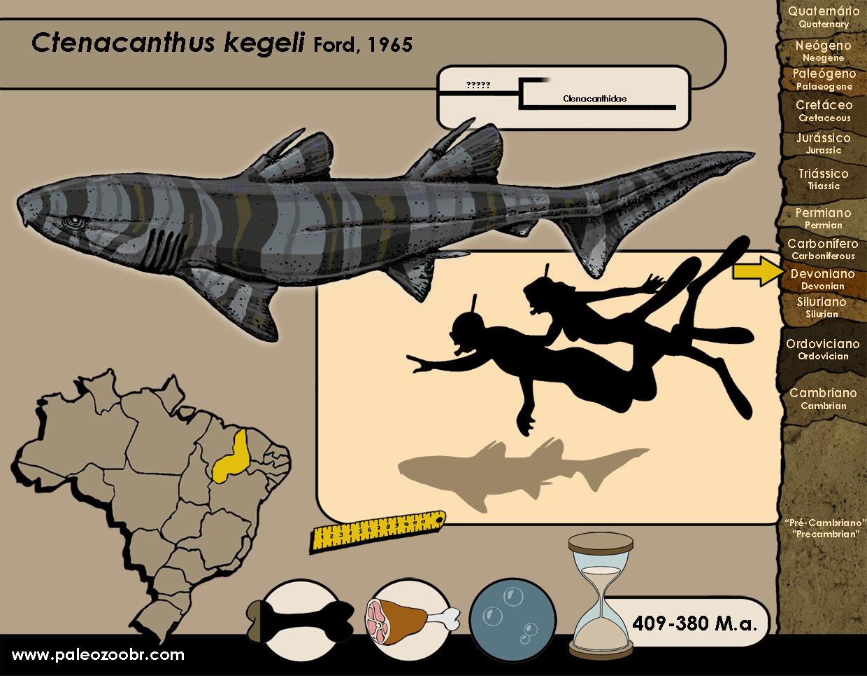 Ctenacanthus kegeli