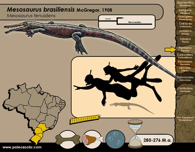 Mesosaurus brasiliensis