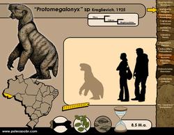 Protomegalonyx sp