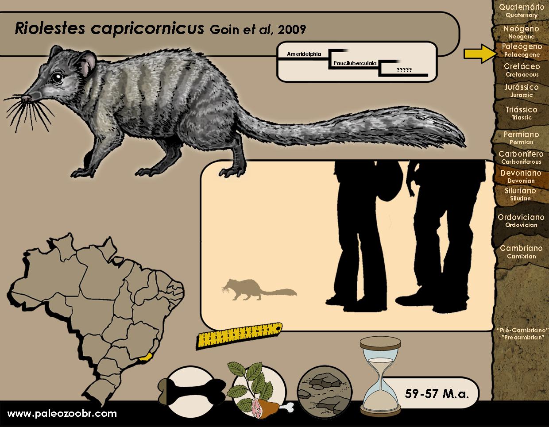 Riolestes capricornicus
