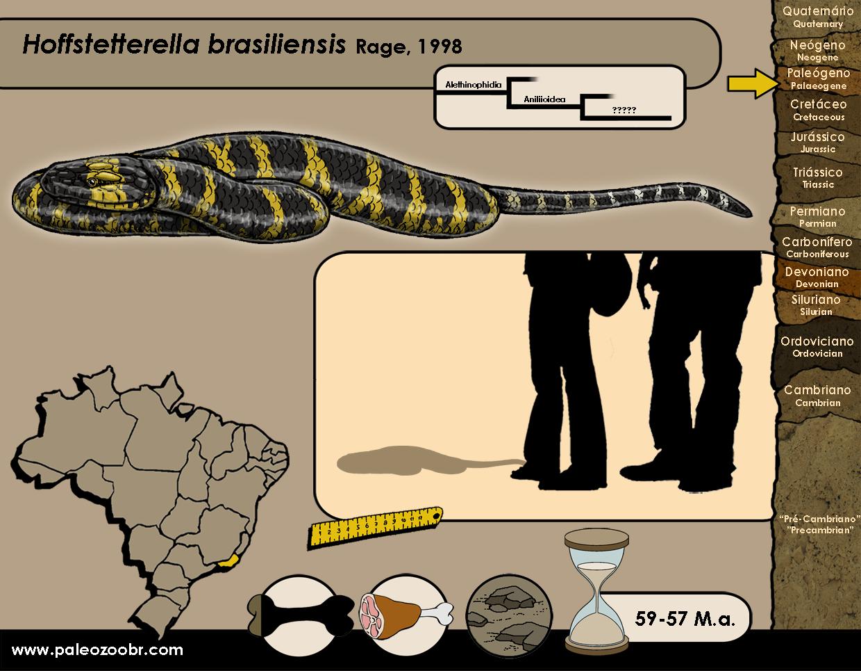 Hoffstetterella brasiliensis