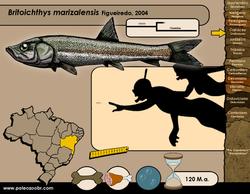 Britoichthys marizalensis