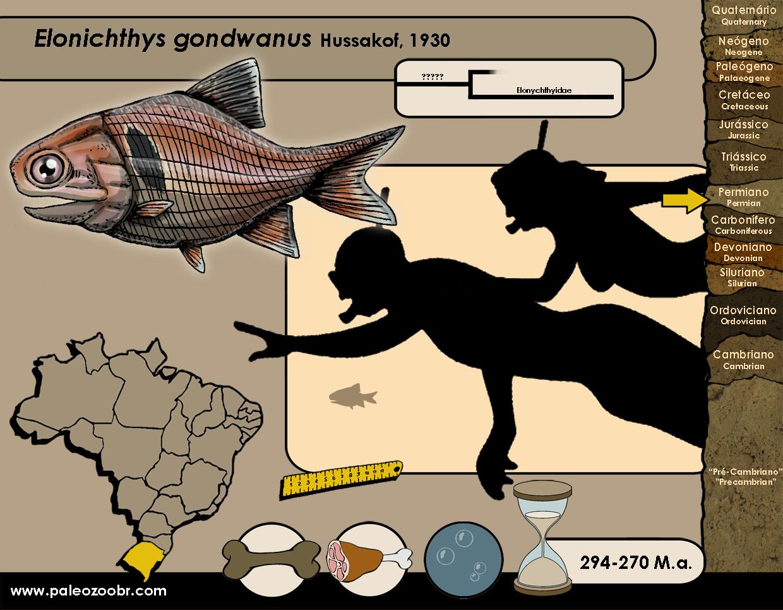 Elonichthys gondwanus