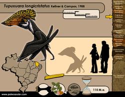 Tupuxuara longicristatus