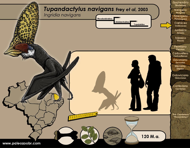 Tupandactylus navigans