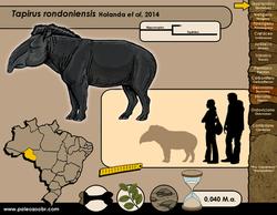 Tapirus rondoniensis