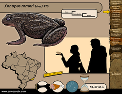 Xenopus romeri