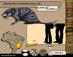 Oxymycterus cosmodus