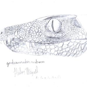 """02 - Heitor Miguell  """"Gondwanasuchus scabrosus"""" (desenho em papel com grafite) Um retrato de Gondwanasuchus scabrosus"""