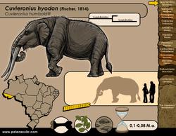 Cuvieronius hyodon