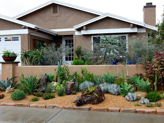 Xeriscaping in San Diego