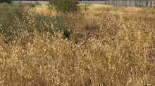 Defensible Spaces: Prevent Wild Fires