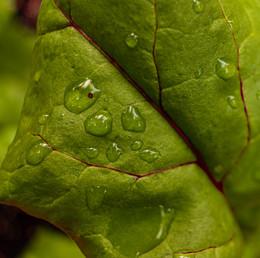 Beet Greens.jpg