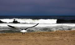 Takeoff ocean grove.jpg