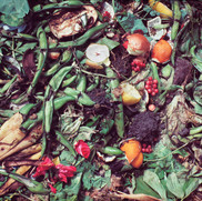 Compost/Red Currants
