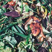 Compost/Sunny Banana