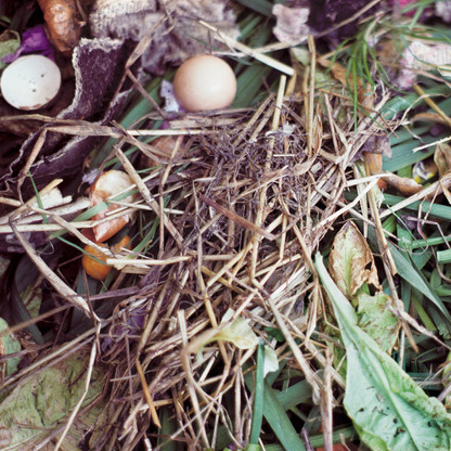 Compost/Straw with Eggshells