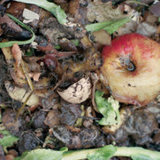 Compost/Apple II