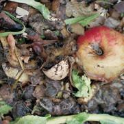 Compost/Apple II