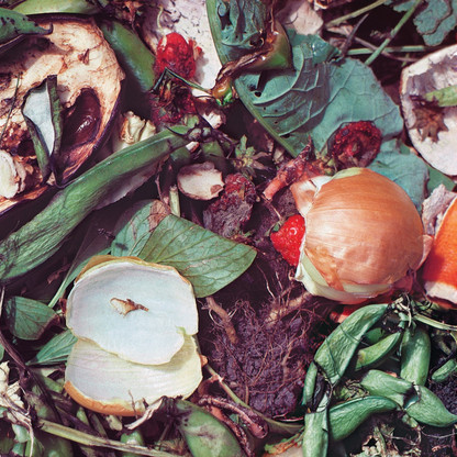 Compost/Onion