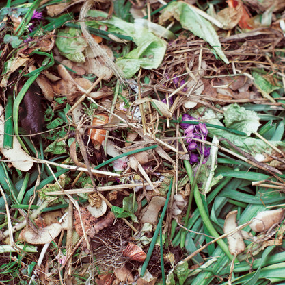 Compost/Straw with Purple Flower