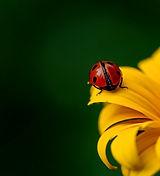 ladybug-3475779_1920.jpg