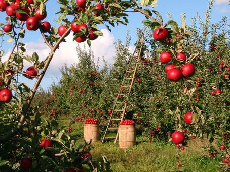 משקי עזר במושבים - כתבה שפורסמה באתר האיחוד החקלאי