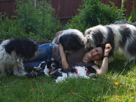 Die Familie kommt zu Besuch - erste Hundekontakte für die beiden